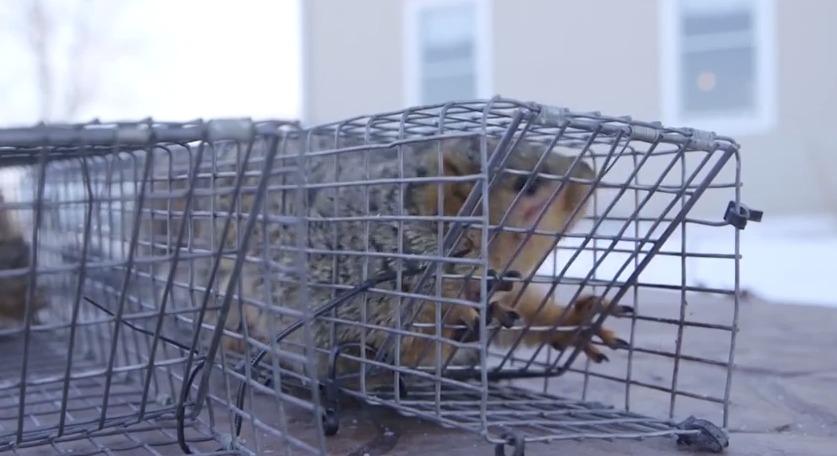 Unwanted Pests – Friday, February 6, 2015