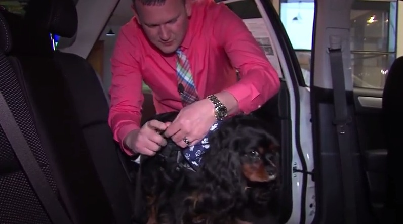 Pet Car Accessories – Friday, March 6, 2015