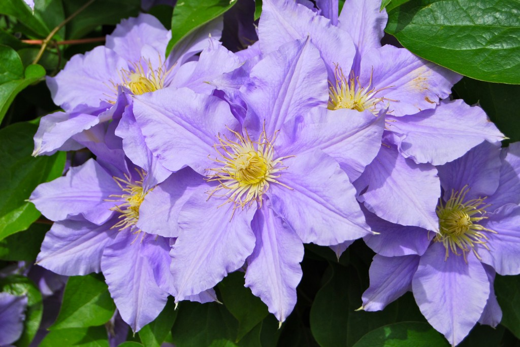 Do You Know the Difference Between Annuals Vs Perennials