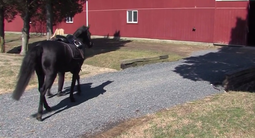 Halo's Haven Horse Rescue – Wednesday, April 8, 2015