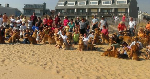 Golden Retrievers Return to Dewey Beach May 8-10