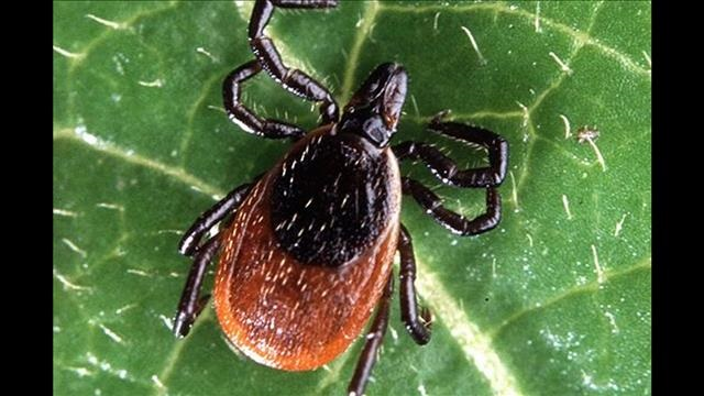 Lyme Disease – Wednesday, June 24, 2015