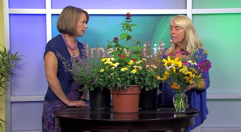 Bee Population & Planting Pollinators – Tuesday, June 30, 2015