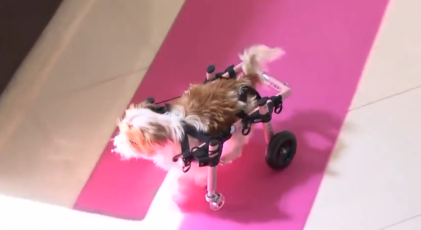 Dogs & Disabilities and Kids & Hydration – Friday, July 10, 2015