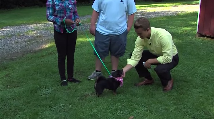Pet Connect – Friday, July 17, 2015