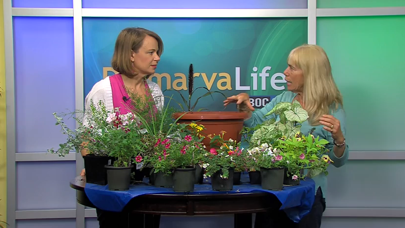 Gardening with Ginny – Tuesday, May 19, 2015