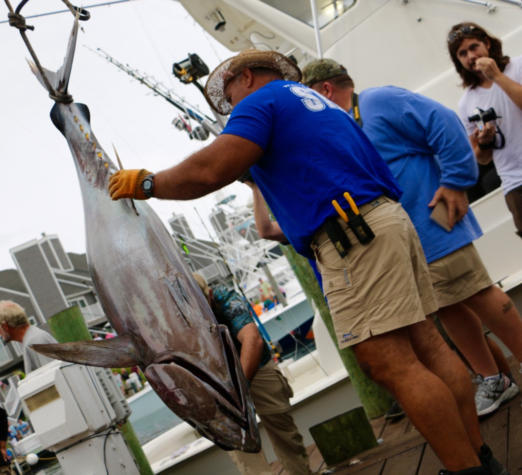 White Marlin Open, Ocean City's Largest Fishing Tournament, Celebrates 43 Years