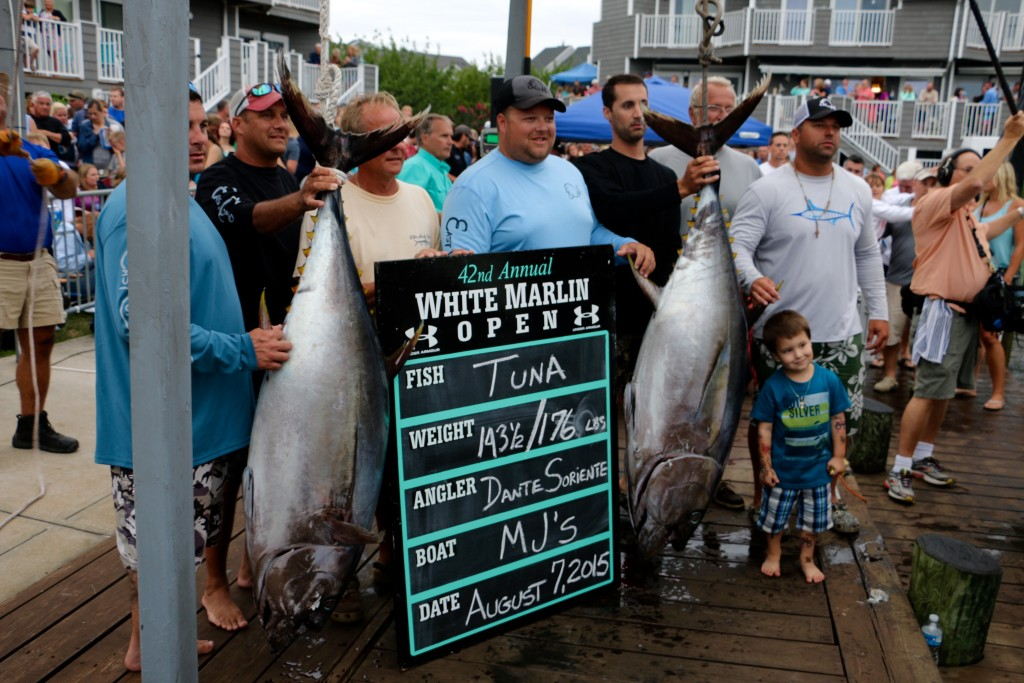 White Marlin Open 2015 (Photo: Taylor Rogers/WBOC)