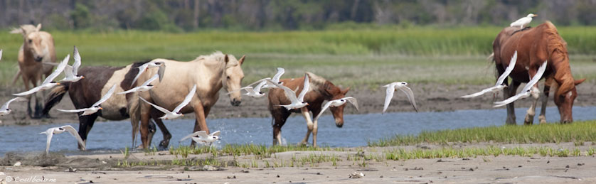 Assateague State Park Celebrates 50 Years