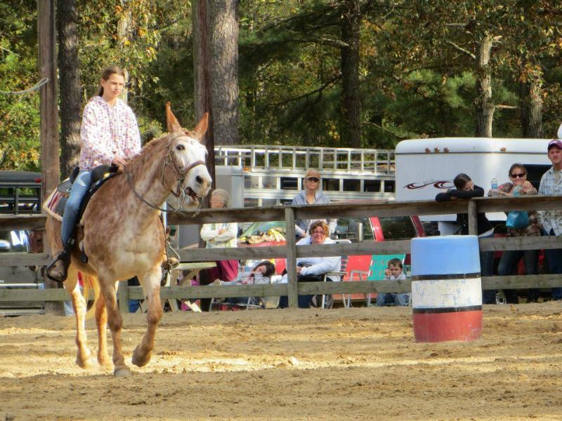 Delmarva Coon Hunters' Association Holds 38th Annual Mule Show