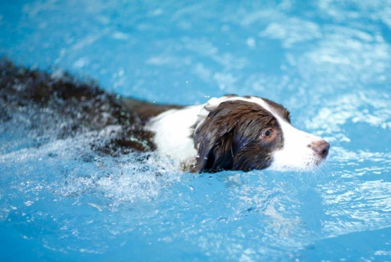 Ocean Pines Doggie Swim Benefits Worcester County Humane Society