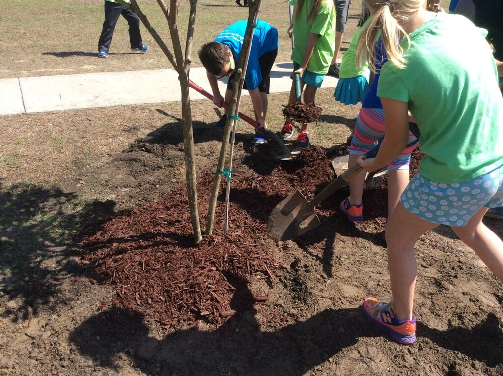 """""""Trees Rock"""" Campaign – Thursday, October 15, 2015"""