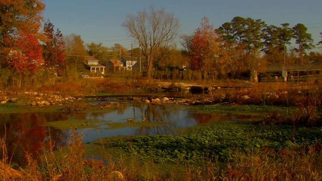 Travels With Charlie: Millponds of Delmarva