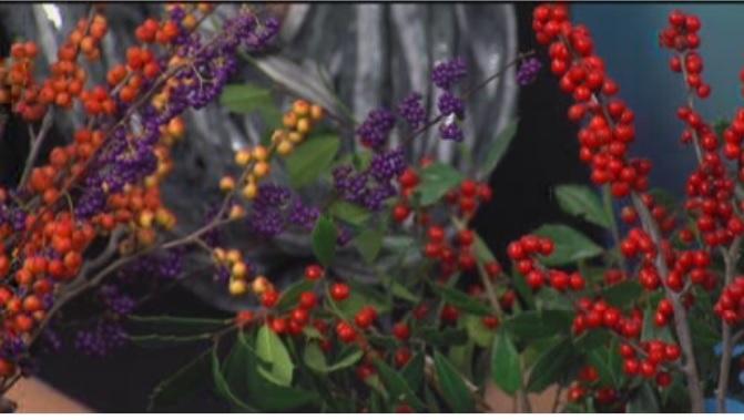 Gardening with Ginny – Monday, November 23, 2015