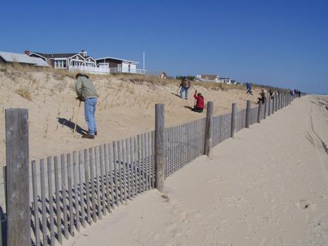 DNREC's 27th Annual Beach Grass Planting