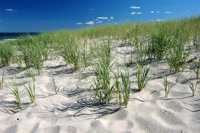 Plan on Planting: Delaware Beach Event to Enhance Environment
