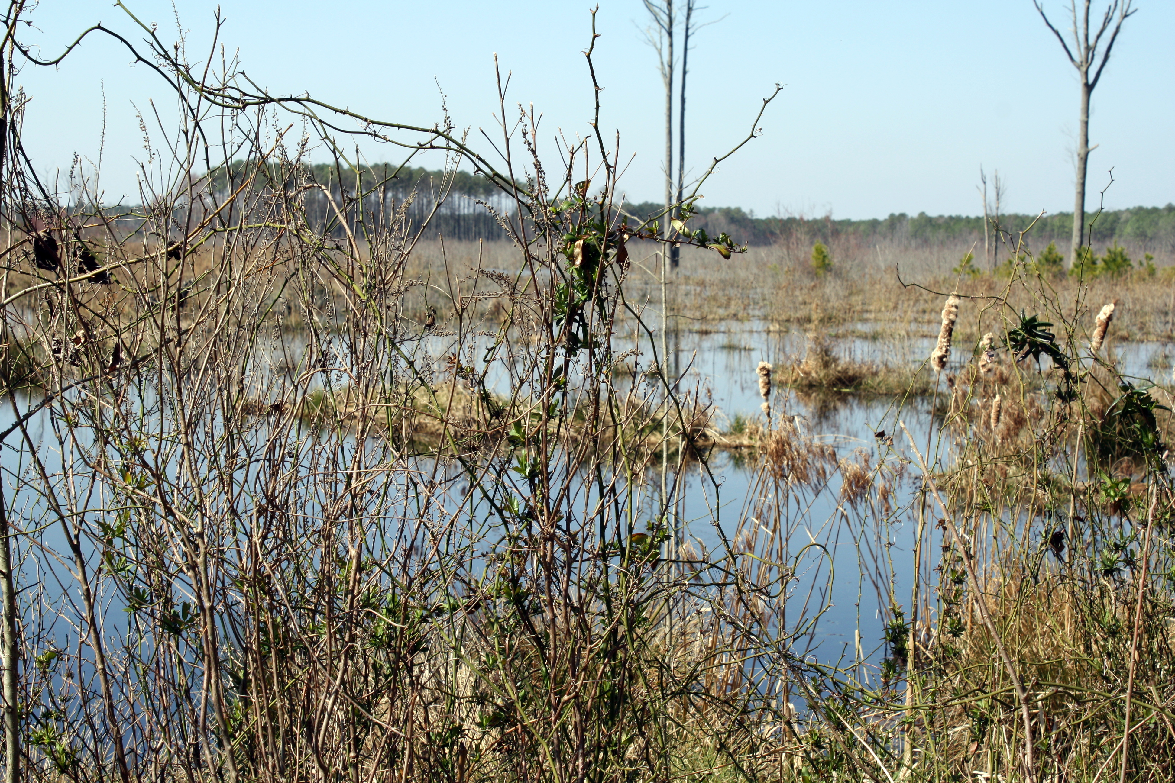 The Great Cypress Swamp