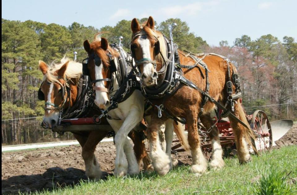 Updated: Mt. Hermon Plow Days Moved to April 9