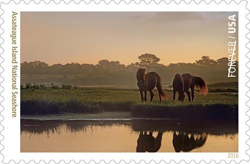U.S. 'Forever Stamp' to Celebrate Assateague Island National Seashore