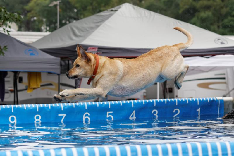 Pooch Palooza: Delmarva Unleashed Holds Dog's Day Out at Frontier Town