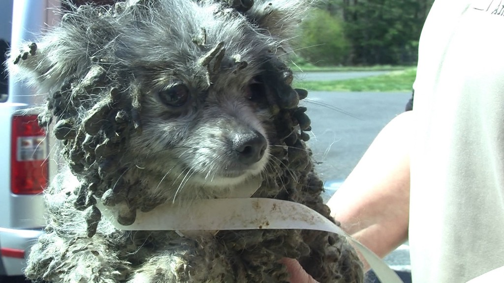 Wicomico County Humane Society Accepts Donations for Mistreated Dogs