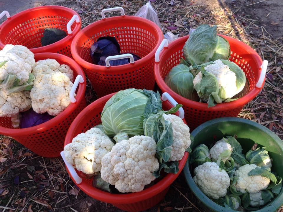 Fresh vegetables at the Riverwalk Farmers Market (Courtesy: Riverwalk Farmers Market)