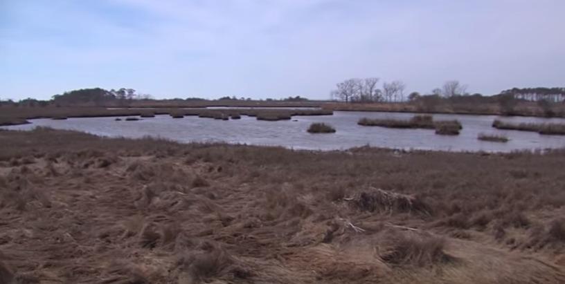 Marsh Restoration at Assateague Island National Seashore Park