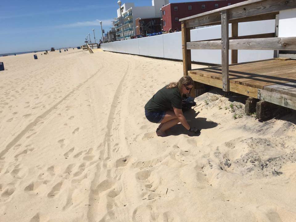 'Adopt Your Beach' with Ocean City Surf Club