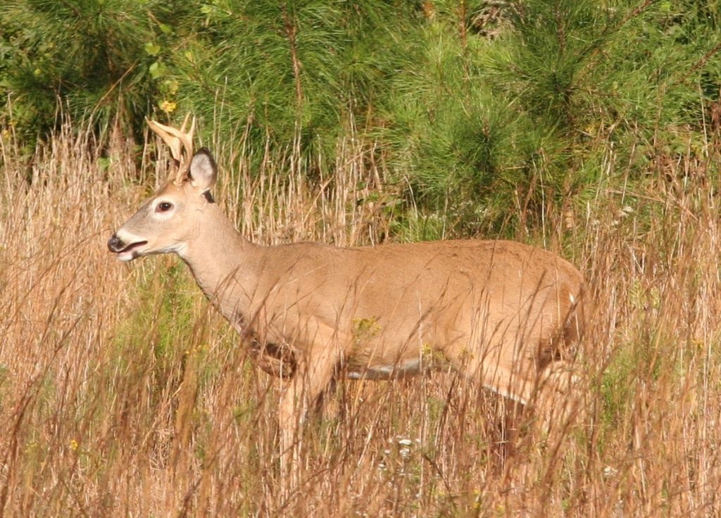 2016-17 Sunday Deer Hunting Dates Announced in Delaware