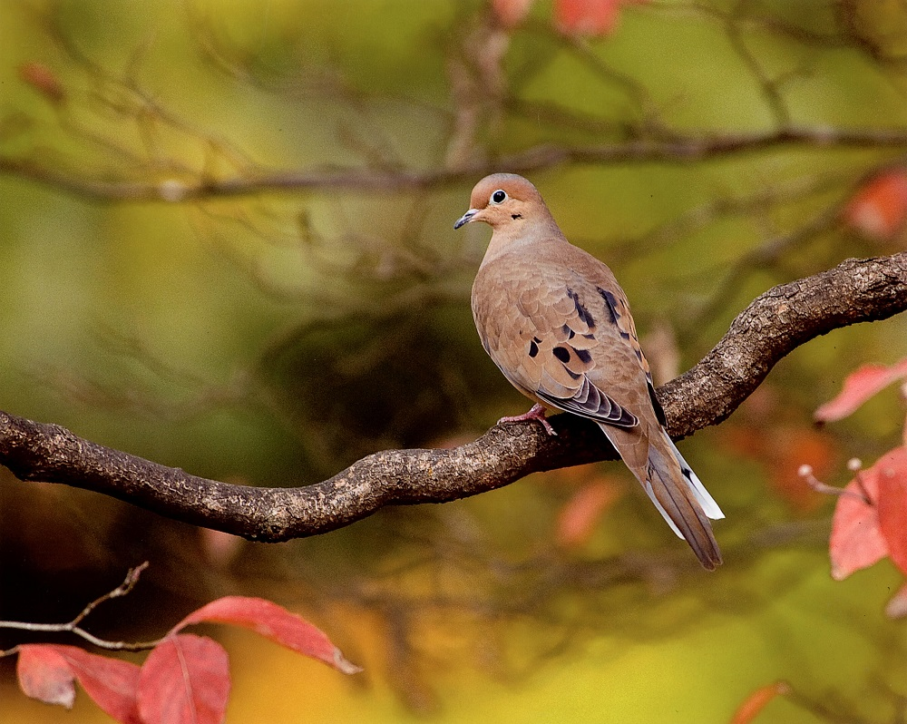 Md. DNR Announces Early Migratory Game Bird Hunting Seasons