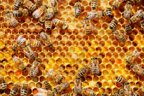 Jim Leether Gives Us The Buzz On The Bees