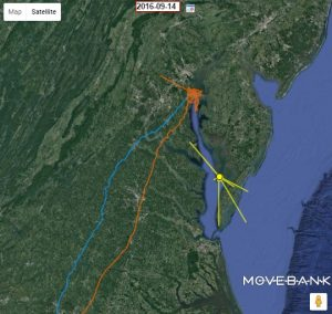 osprey-tracking-map-chesapeake-bay-foundation