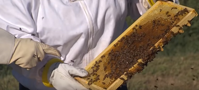 Help the Declining Honey Bee Population