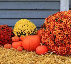 halloween-lineup-fall