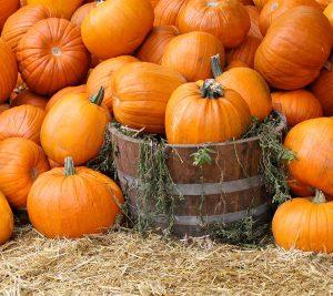 halloween-lineup-pumpkins