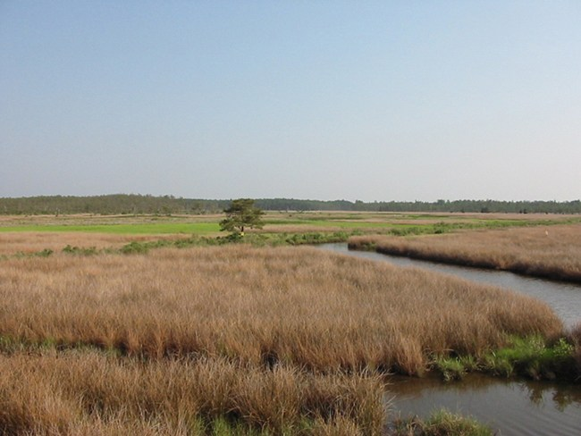 2017 Trapping Areas Open for Bids at Blackwater National Wildlife Refuge