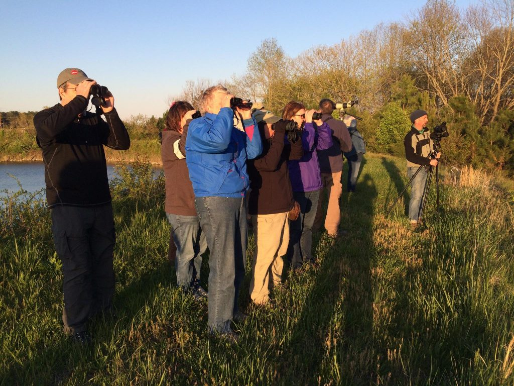 Rarity Roundup Welcomes Many of Maryland's Best Birders to Worcester County