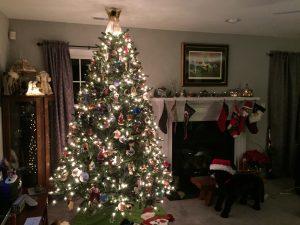 Eden Christmas tree, by Joe Burris in Eden, Maryland.
