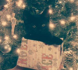 Olive the Christmas Cat. Photo by Erin Lee Pruitt of Smith Island, Maryland.