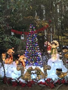 Photo submitted by Tracey Hofman of Ocean Pines, Maryland.