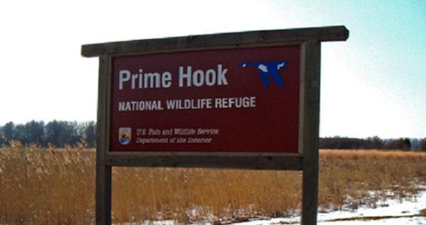 Prime Hook National Wildlife Refuge to Close for Deer Hunt