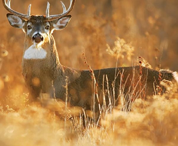 Firearm Deer Season Reopens in Most of Maryland