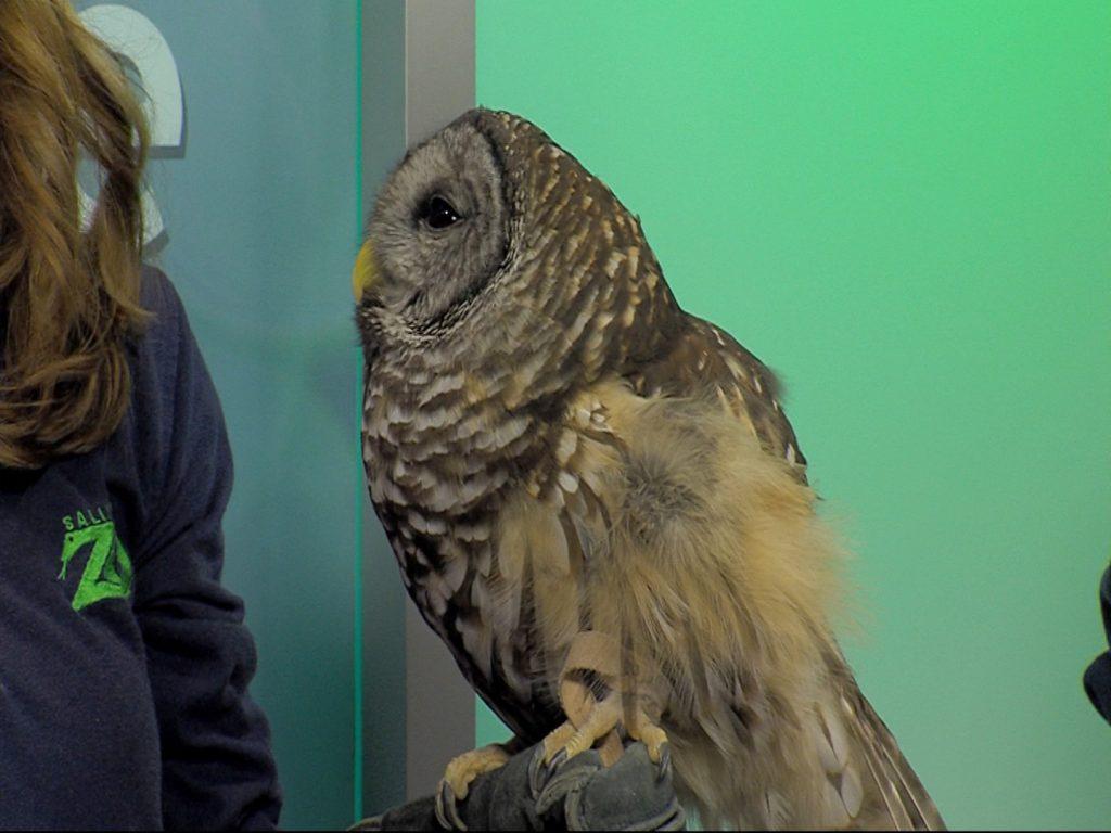 The Benefits of Becoming a Salisbury Zoo Volunteer