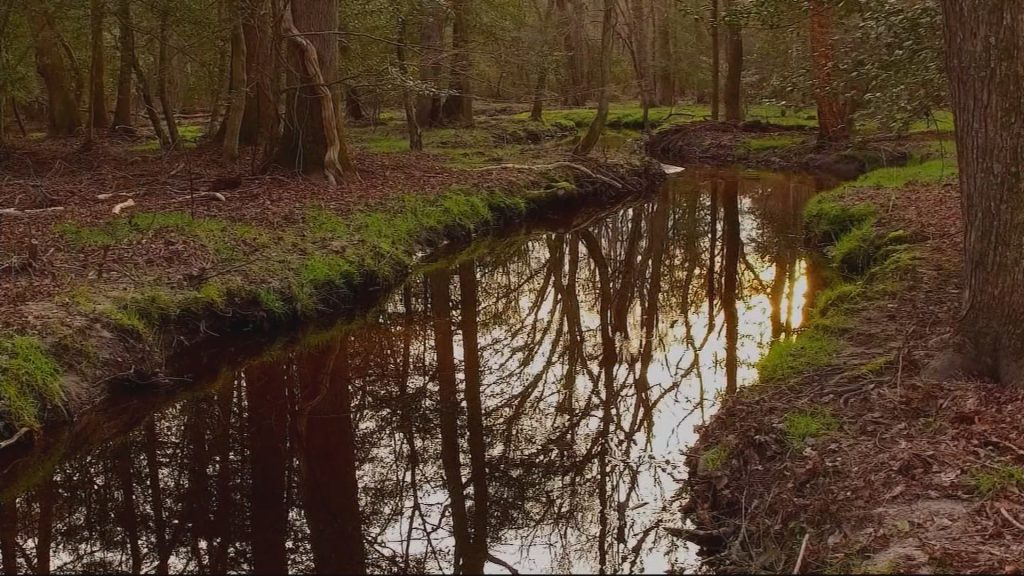 Travels With Charlie: The Great Dismal Swamp