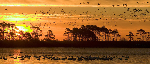 Chincoteague National Wildlife Refuge Could See Fee Increase