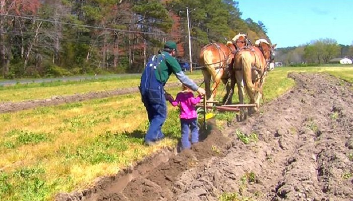 11th Annual Mt. Hermon Plow Days Showcases Real Horse Power