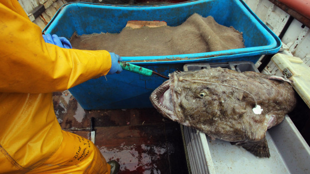 Feds Holding the Line on Monkfishing Rules for Now