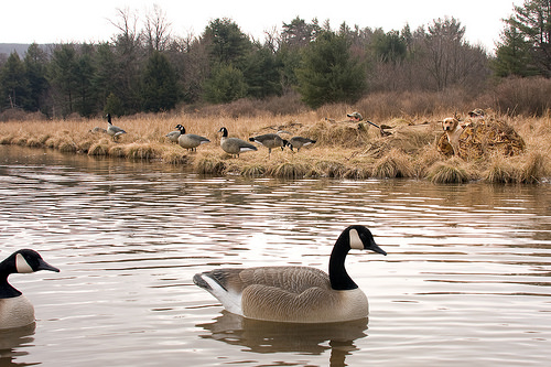 Maryland Announces Early Migratory Game Bird Hunting Seasons