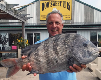 Deal Island Angler Catches State Record Sheepshead