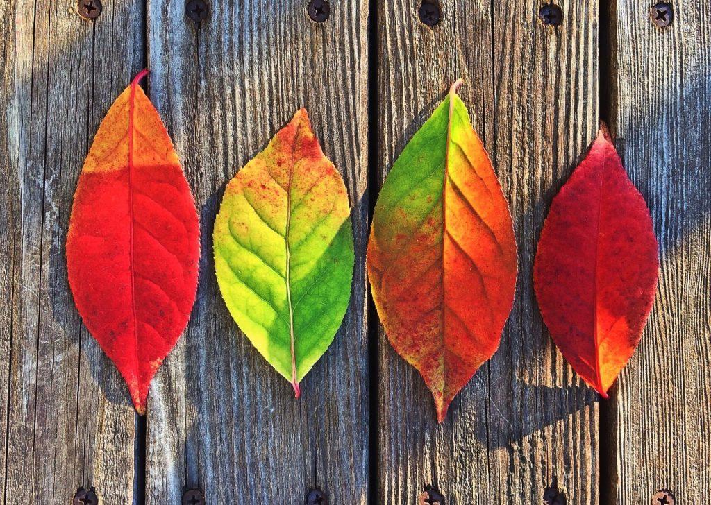 Gardening Expert, Ginny Rosenkranz Talks Fall Foliage
